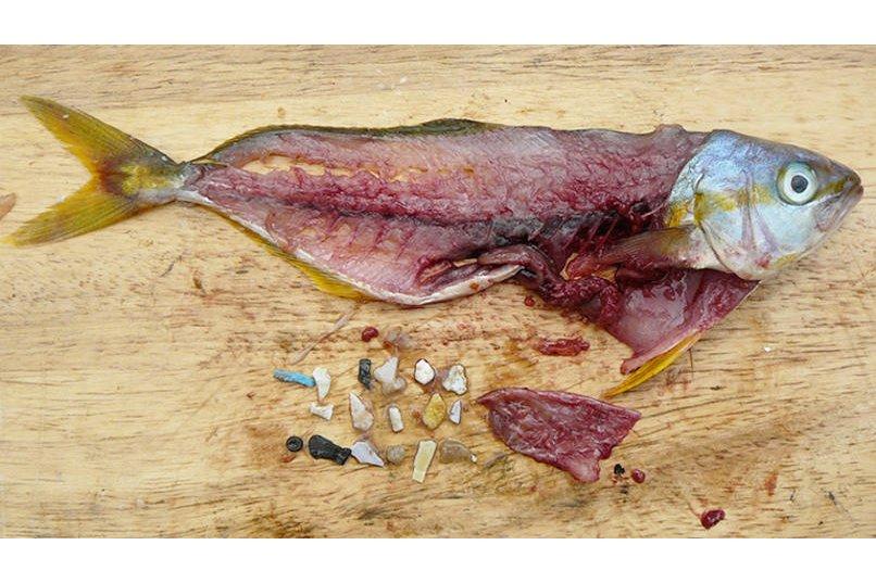 Microplastiche e tossine: questione che ci tocca molto più da vicino di quanto percepiamo