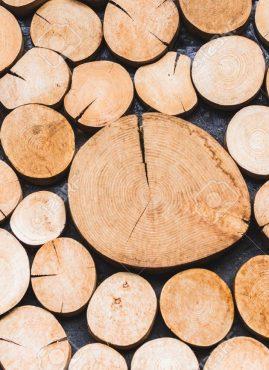 Wijld: due giovani creano abbigliamento dal legno