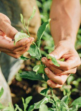 ZeroCO2: una riforestazione ad alto impatto sociale