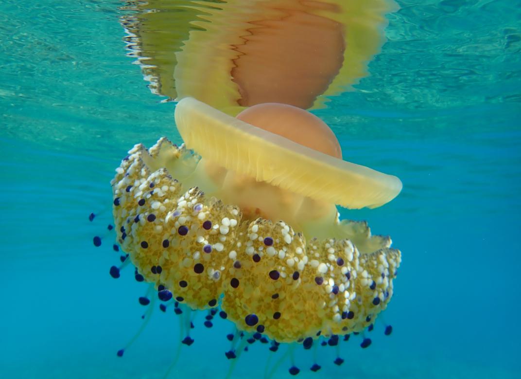 Insieme per salvare i nostri mari e il nostro futuro, la petizione di 30×30 Italia