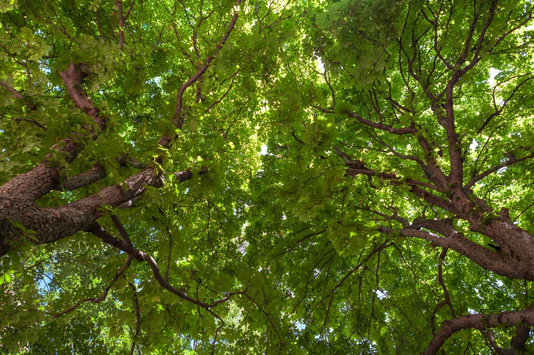 The Mangrovia, il market place sostenibile